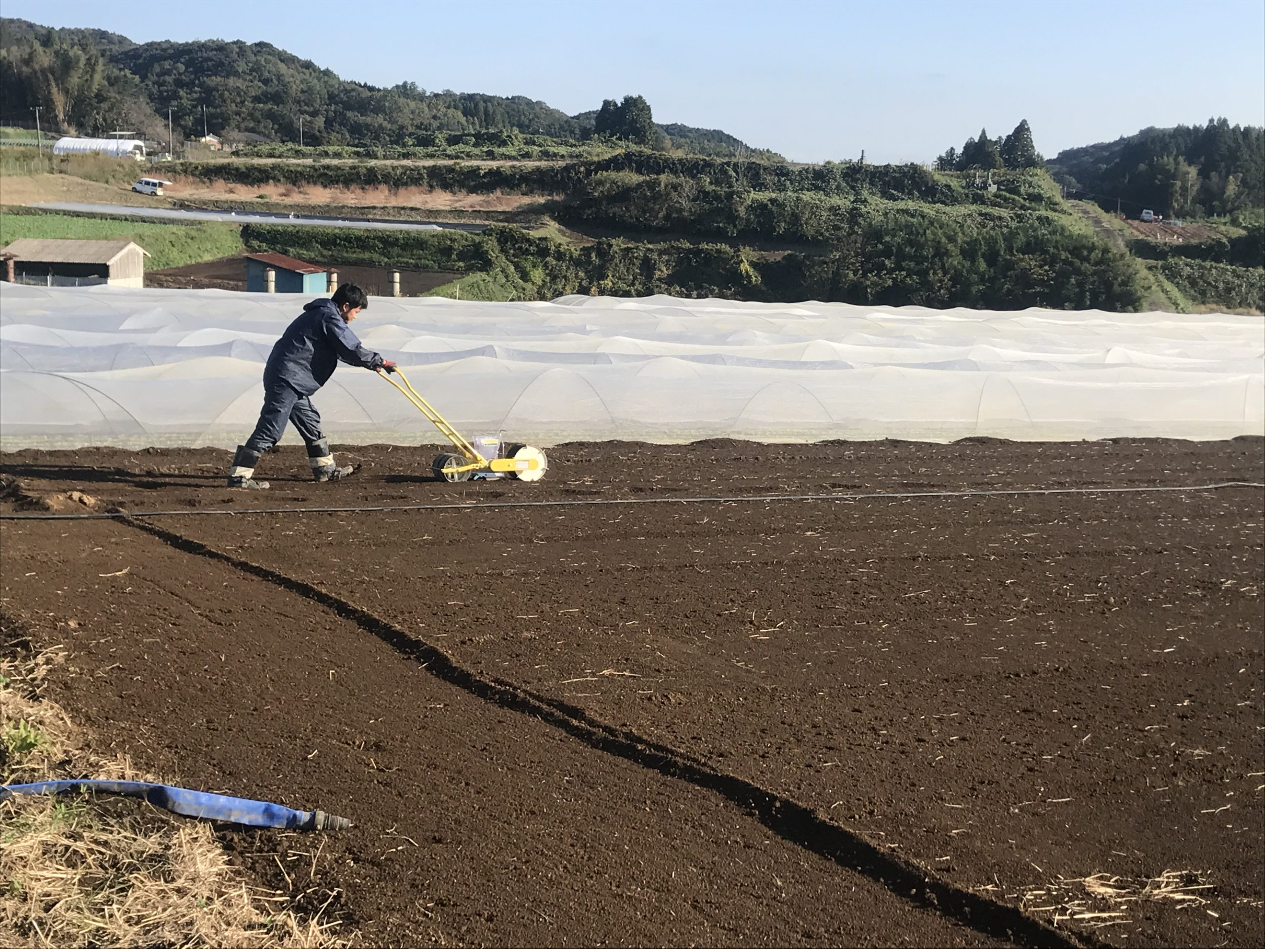冬に向けて作付け有機栽培実施中